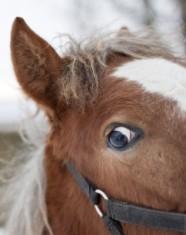crazy-pony